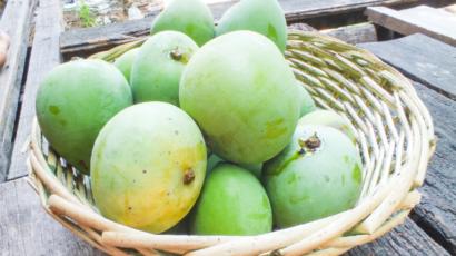कच्चे आम के फायदे और नुकसान – Raw Mango