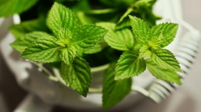 पुदीना के फायदे और नुकसान – Peppermint Benefits