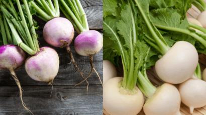 शलजम के 18 फायदे और नुकसान – Turnip और White Turnip