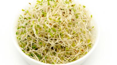 अल्फाल्फा के फायदे और नुकसान – Alfalfa