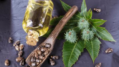 अरंडी के तेल के फायदे और नुकसान – Castor oil
