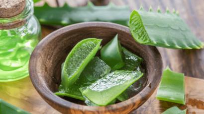 एलोवेरा (घृतकुमारी) के फायदे और नुकसान – Aloe Vera