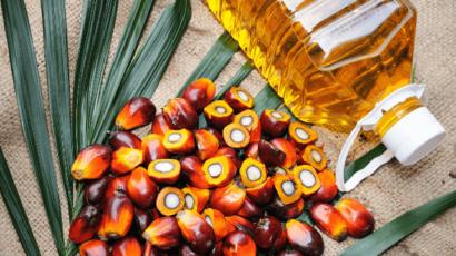 ताड़ तेल के फायदे और नुकसान – Palm Oil Benefits