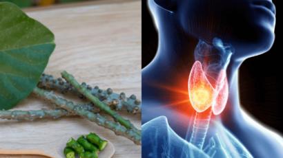 थायराइड में गिलोय के फायदे (Benefits of Giloy in thyroid)