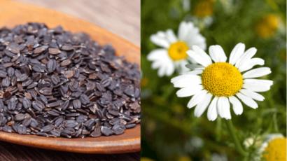 अकरकरा और तुलसी के बीज के फायदे – Akarkara and Basil Seeds