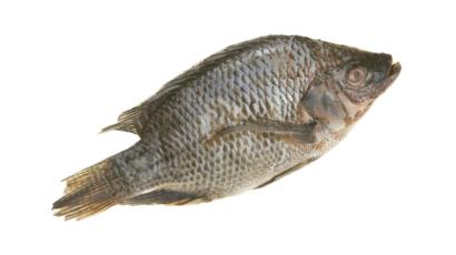 तिलापिया मछली के फायदे और नुकसान – Tilapia Fish