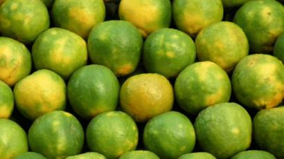मौसंबी के फायदे और नुकसान – Mosambi (Sweet lemon)