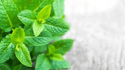 लेमन बाम के फायदे और नुकसान – Lemon Balm