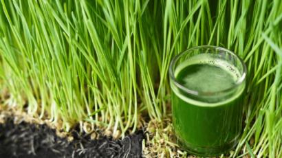 गेहूं के जवारे के फायदे और नुकसान – wheatgrass