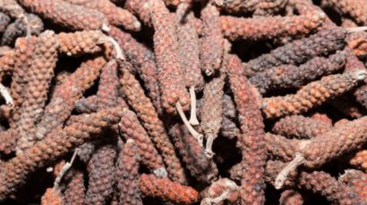 पिप्पली के फायदे और नुकसान – Long pepper (Pippali)