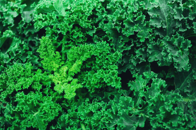 केल (काले) के फायदे और नुकसान – Leaf Cabbage (Kale)