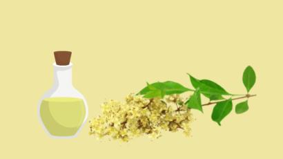 मेहंदी के तेल के फायदे और नुकसान – Mehndi oil