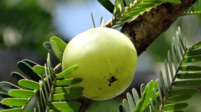 सुबह खाली पेट आंवला खाने के फायदे