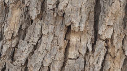 नीम की छाल के फायदे – Benefits of Neem Bark