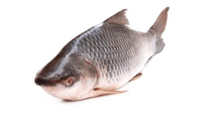 रोहू मछली खाने के फायदे – Benefits of Rohu Fish